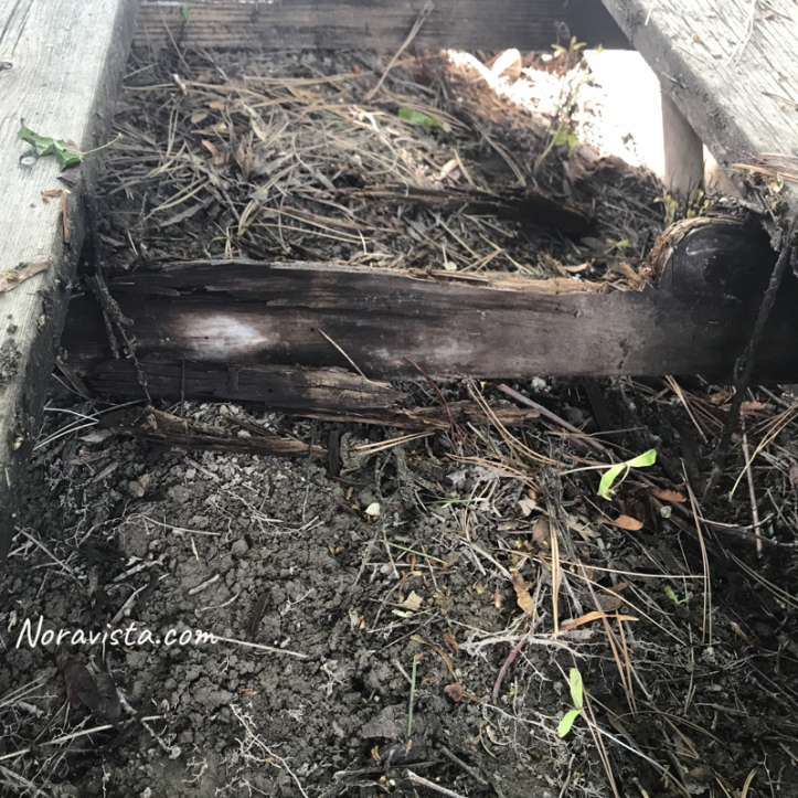 A redwood decking support that has rotted out