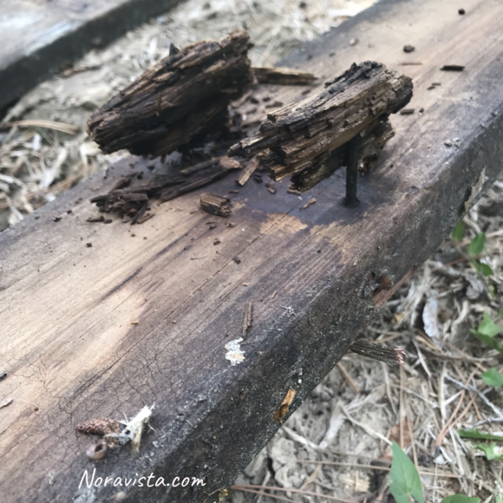 A redwood board that has been pulled away from its support that has rotted out with some of the rotting wood still attached to its original nails