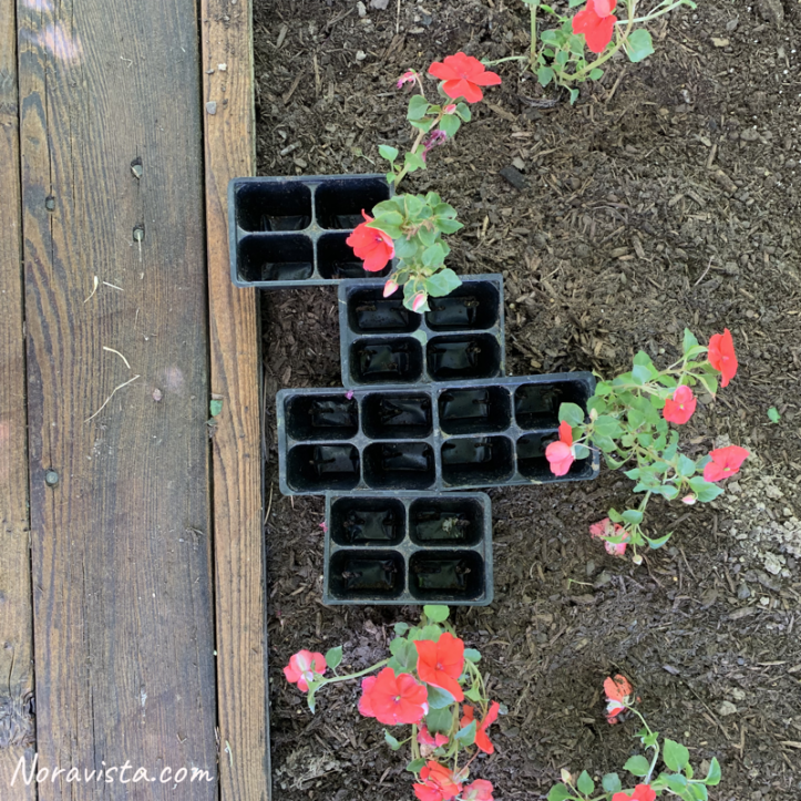 Plastic plant containers used to space flowers when planting