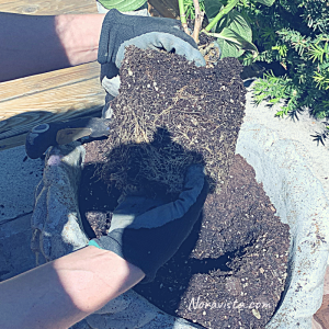 A hand combing through a root ball on a potted flower