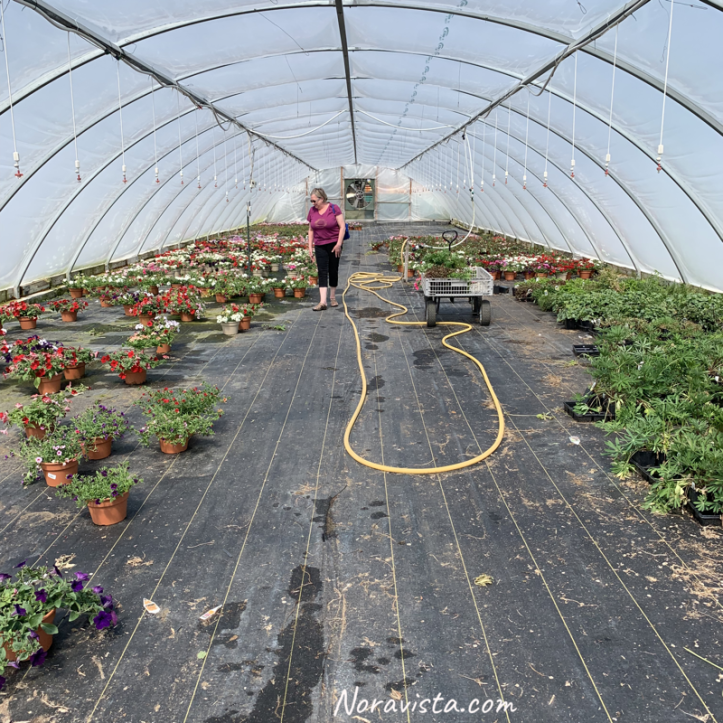 A woman browsing a near empty greenhouse