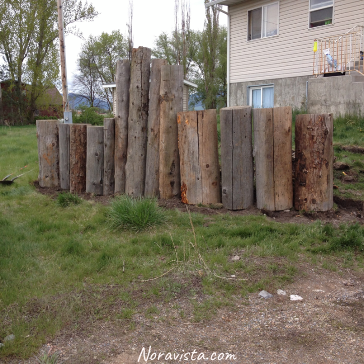 Big logs set up on their ends in a row in a front yard set in a trench in the grass